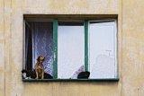 Kot, pies i kot